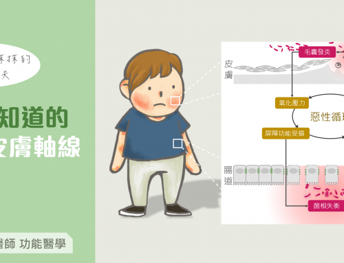 除了外在保養表面功夫,你該知道的腸道皮膚軸線